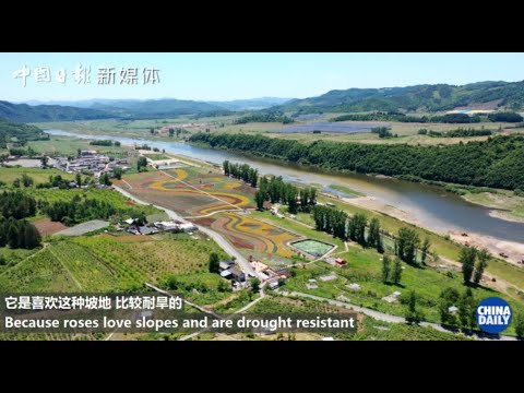 Black soil in Jilin province is being revitalized to help locals live well-off lives
