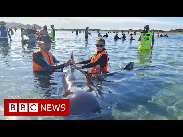 Rescuers save whales from notorious stranding spot